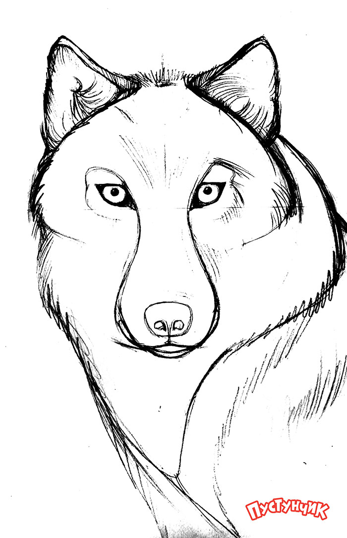 Как нарисовать волка своими руками карандашом